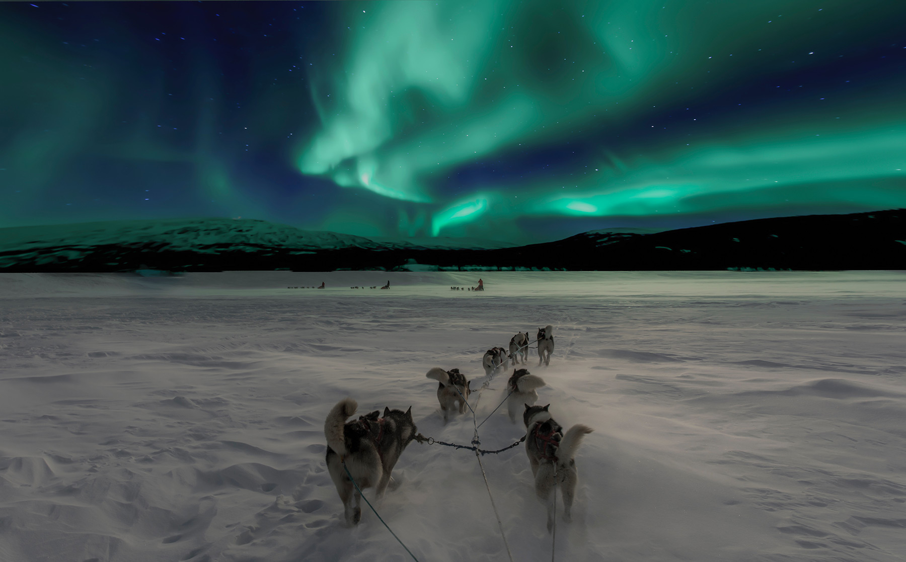 dogs pulling sleigh during night aurora borealis