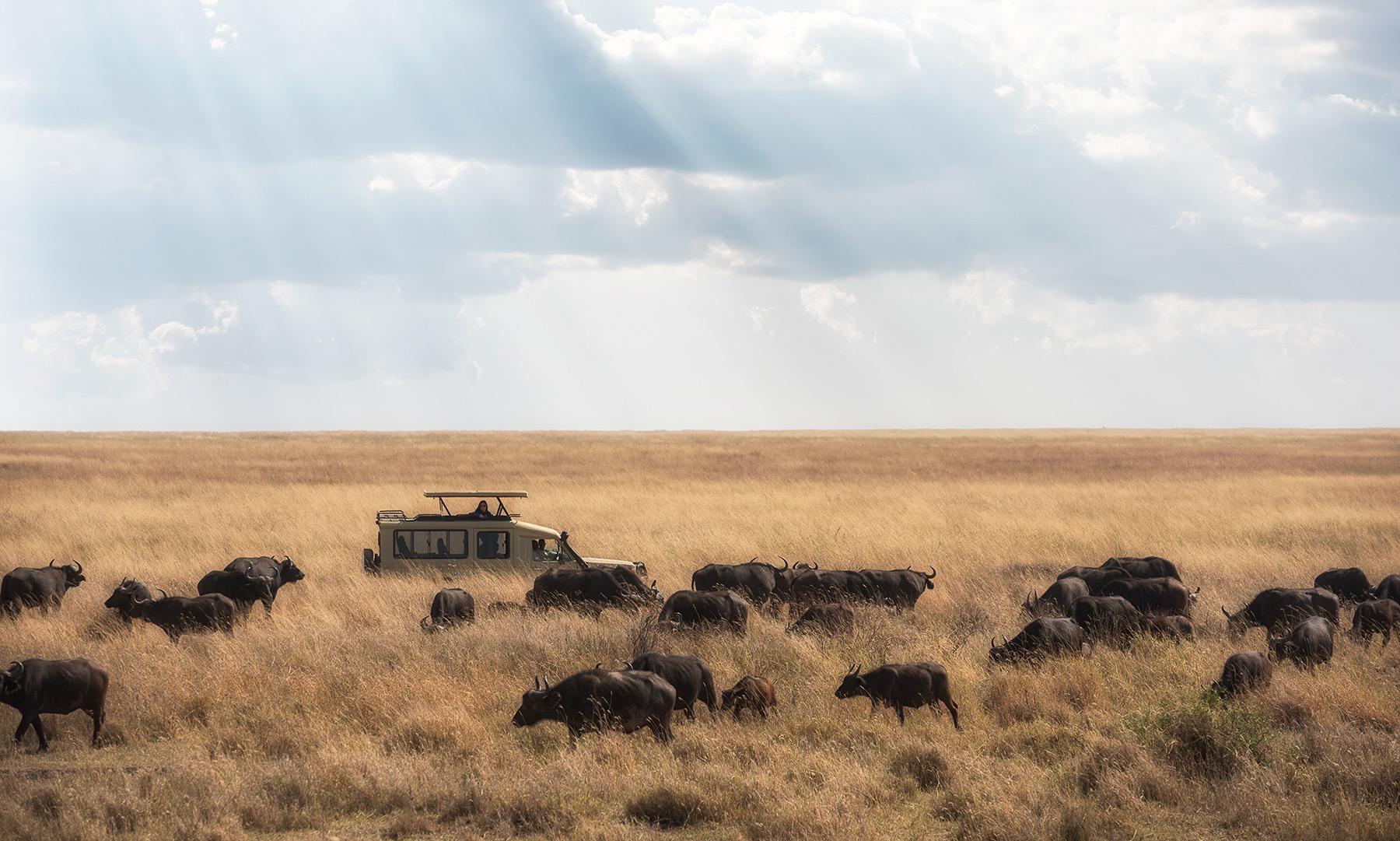 animals in desert africa travels
